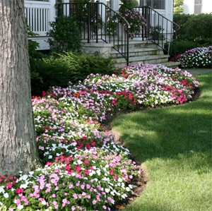 Mother's Day Flowers Impatiens