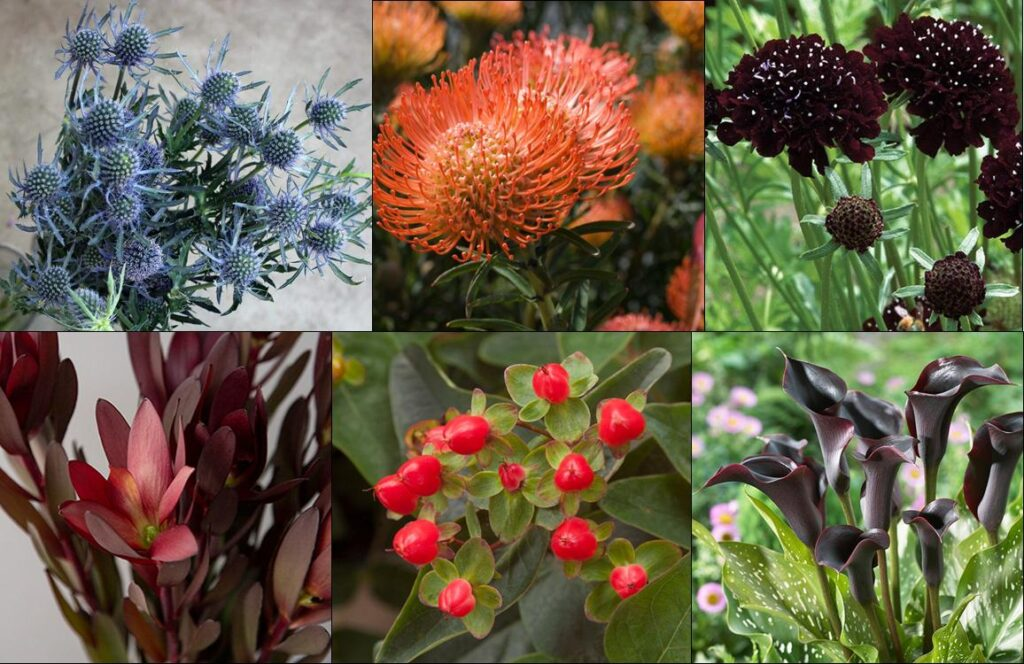 Father's Day Flowers. Thistle, protea, scabiosa, safari sunset, hypericum berries, calla lilies.